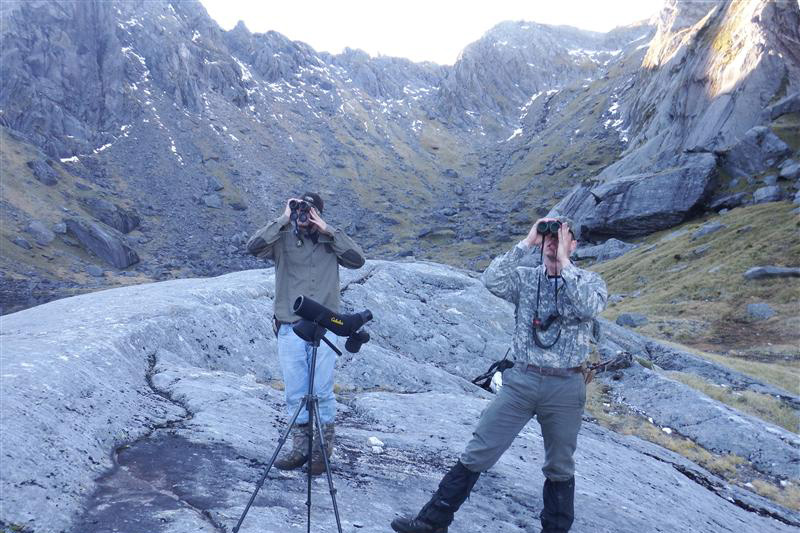 Glassing for Tahr