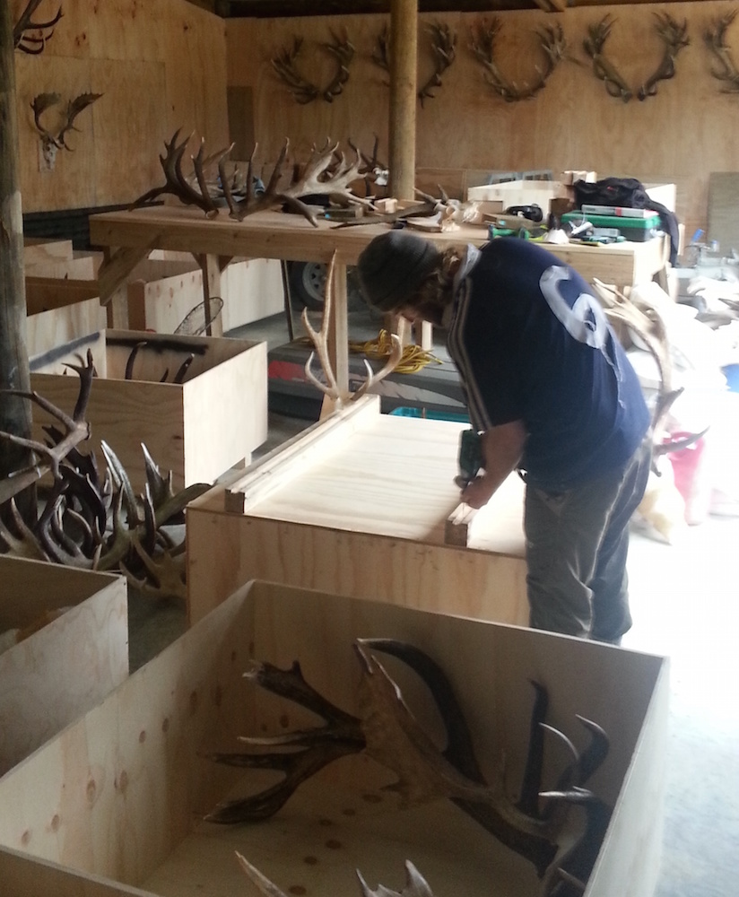 Crating trophies
