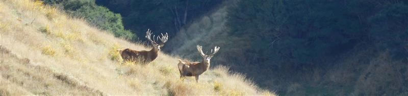 Stags soaking up the sun
